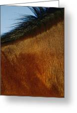 A Horses Neck And Mane, Seen So Close Greeting Card