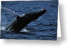 A Humpback Whale Breaching Greeting Card