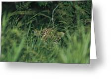 A Jaguar Peeks Out From The Foliage Greeting Card
