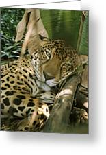 A Jaguar Rests On The Jungle Floor Greeting Card