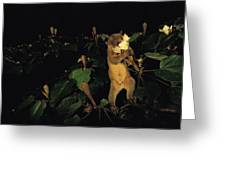 A Kinkajou Drinks Deeply Of Balsa Greeting Card