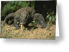 A Komodo Dragon Sensing The Air Greeting Card