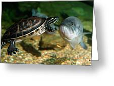 A Large Mouthed Bass And A Chicken Turtle In Aquarium In Cape Co Greeting Card