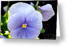 A Lavender Pansy Greeting Card