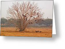 A Leafless Tree That Is Home To A Large Number Of Big Birds In The Middle Of A Ground Greeting Card