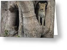 A Leopard And Cub Inside A Giant Baobab Greeting Card