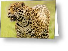 A Leopard Greeting Card