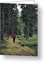 A Lone Hiker Enjoys A Wooded Trail Greeting Card by Tim Laman