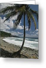 A Lone Palm Tree Grows From The Rocky Greeting Card by Michael Melford
