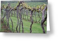 A Love Of Wine Greeting Card