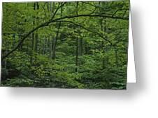 A Lush Green Eastern Woodland View.  An Greeting Card