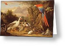 A Macaw - Ducks - Parrots And Other Birds In A Landscape Greeting Card