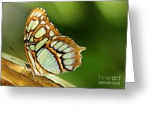 A Malachite Butterfly Greeting Card