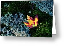 A Maple Leaf Lies On A Bed Of Moss Greeting Card