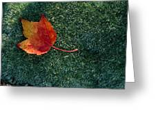 A Maple Leaf Lies On Emerald Moss Greeting Card