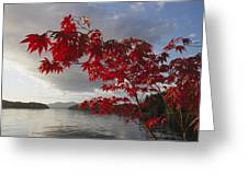 A Maple Tree In Fall Foliage Frames Greeting Card