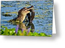 A Meal Fit For A Gator Greeting Card