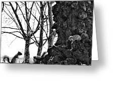 A Meeting Of Squirrels Greeting Card