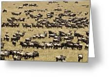 A Migrating Herd Of Wildebeests Greeting Card