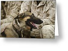 A Military Working Dog Sits At The Feet Greeting Card by Stocktrek Images