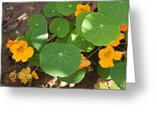 A Mix Of Orange Flowers And Round Green Leaves With Sun And Shadow Greeting Card