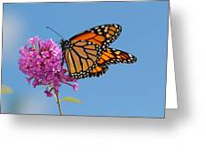 A Monarch Butterfly, Danaus Plexippus Greeting Card by Darlyne A. Murawski