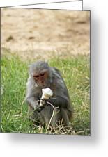 A Monkey Enjoying An Ice Cream Cone Inside Delhi Zoo Greeting Card
