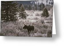 A Moose In A Frost-covered Field, Grand Greeting Card