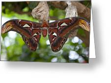 A Moth Clings To Its Cocoon Immediately Greeting Card