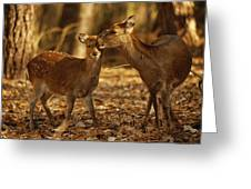 A Mother And Fawn Sika Deer Greeting Card