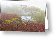 A Natural Garden At Dolly Sods Wilderness Area Greeting Card