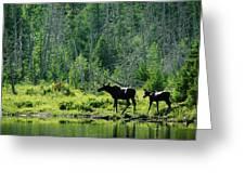 A Natural Salt Lick Lures Moose Greeting Card