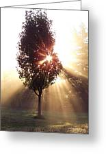 A New Day Fog Sunrise Greeting Card