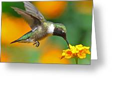 A Nice Hummer Greeting Card by Jessie Dickson
