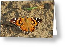A Painted Lady Looking For Sex 8619 3369 Greeting Card