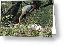 A Painted Stork Feeding Its Young At The Delhi Zoo Greeting Card