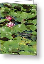 A Painted Turtle Rests On A Water Lily Greeting Card