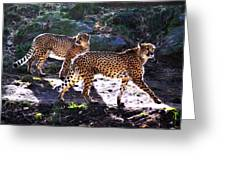 A Pair Of Cheetah's Greeting Card
