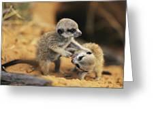 A Pair Of Four-week-old Meerkat Pups Greeting Card