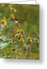 A Pair Of Goldfinches In Spokane Greeting Card
