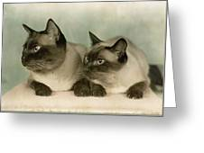 A Pair Of Siamese Cats Greeting Card