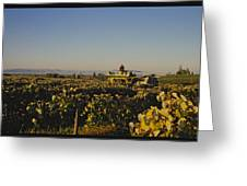 A Panoramic View Of A Vineyard Greeting Card