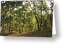 A Path Through A Sparse Forest And Trees Greeting Card