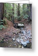 A Peaceful Redwood Creek On Mt Tamalpais Greeting Card