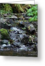 A Peaceful Stream Greeting Card