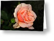 A Peach Of A Rose Greeting Card