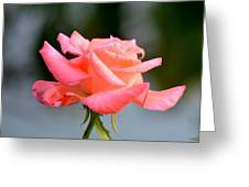 A Peachy Pink Delight Greeting Card