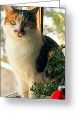 A Pet And Christmas Greeting Card
