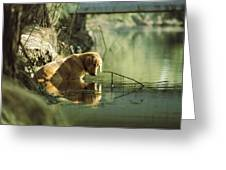 A Pet Dog Sits In The Shallow Water Greeting Card