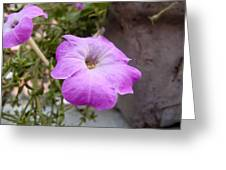 A Photo Of A Purple Trumpet Shaped Flower Greeting Card